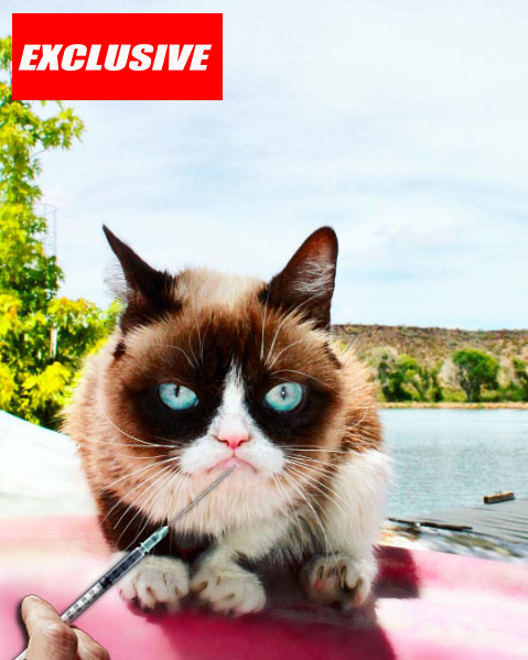 Exclusive: Grumpy Cat Addicted to Botox