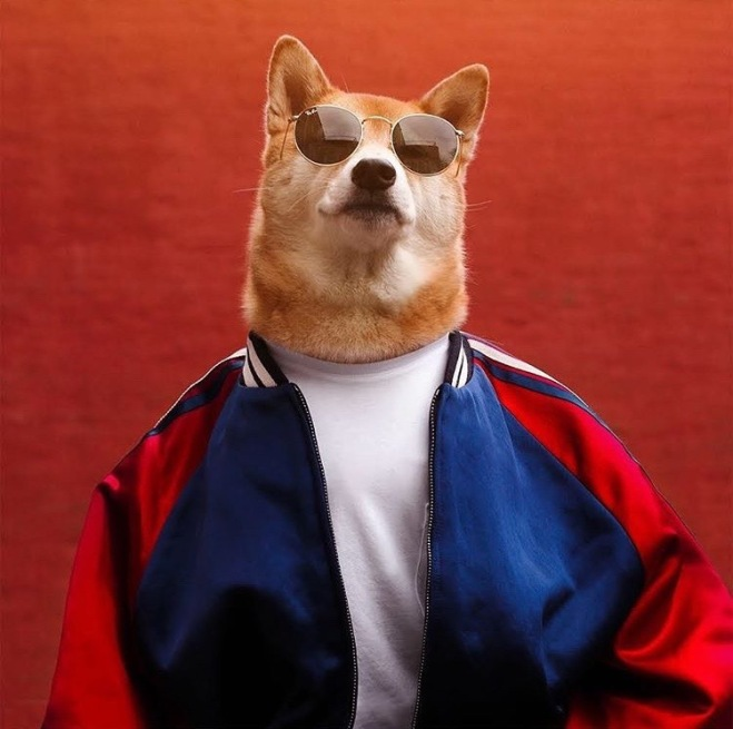 The Menswear Dog
