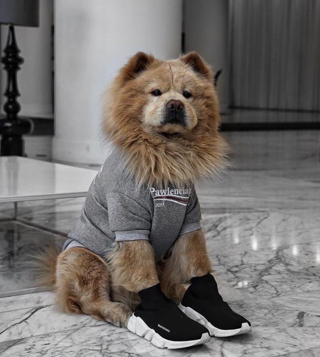 Bear the Chow Chow