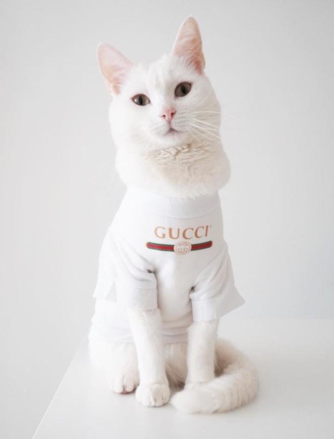 Zappa the Cat