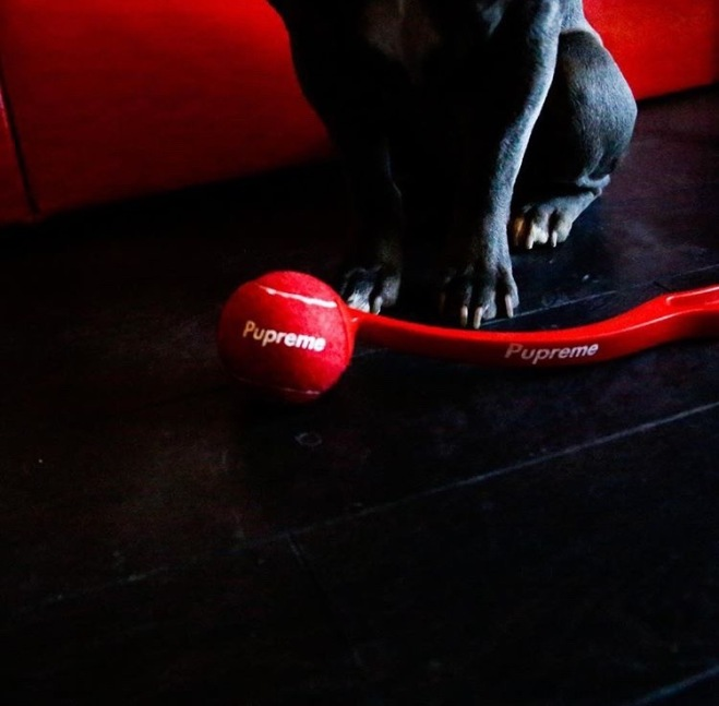 Savage the Frenchie and Pawmain Fetch Stick
