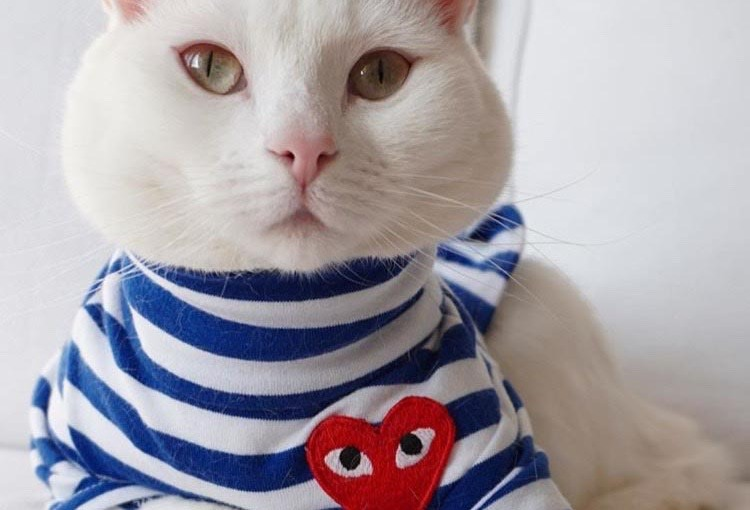 The most STYLISH pets of all time